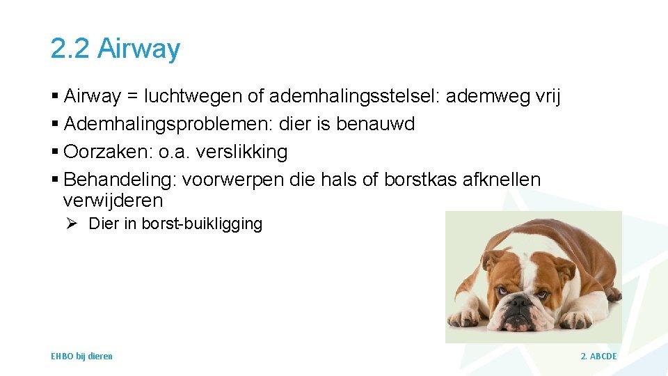 2. 2 Airway § Airway = luchtwegen of ademhalingsstelsel: ademweg vrij § Ademhalingsproblemen: dier
