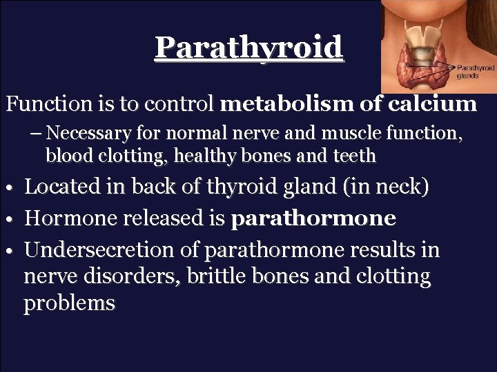 Parathyroid Function is to control metabolism of calcium – Necessary for normal nerve and