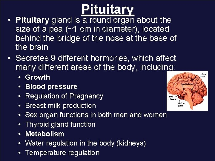 Pituitary • Pituitary gland is a round organ about the size of a pea