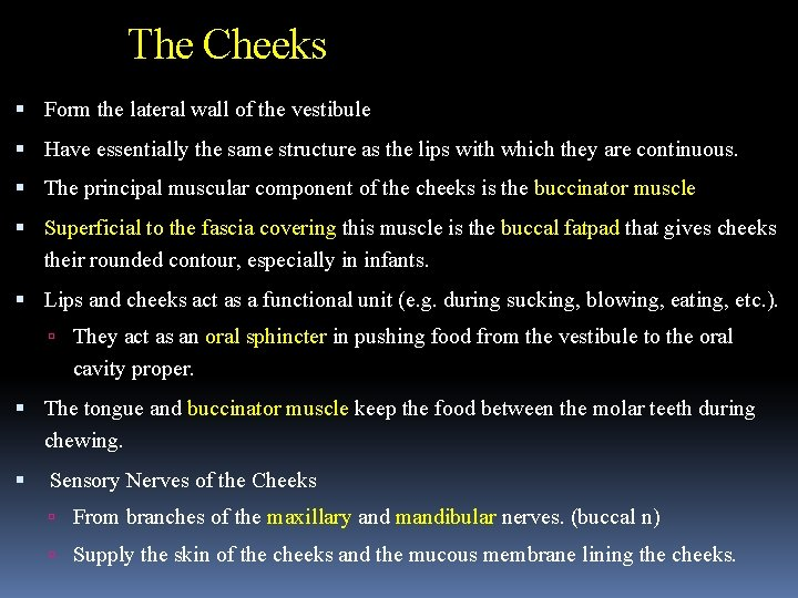 The Cheeks Form the lateral wall of the vestibule Have essentially the same structure