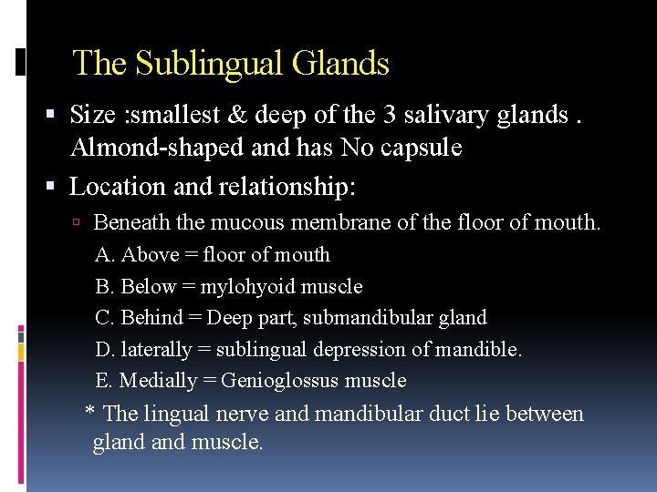 The Sublingual Glands Size : smallest & deep of the 3 salivary glands. Almond-shaped
