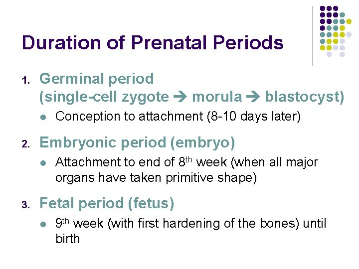 Duration of Prenatal Periods 1. Germinal period (single-cell zygote morula blastocyst) l 2. Embryonic