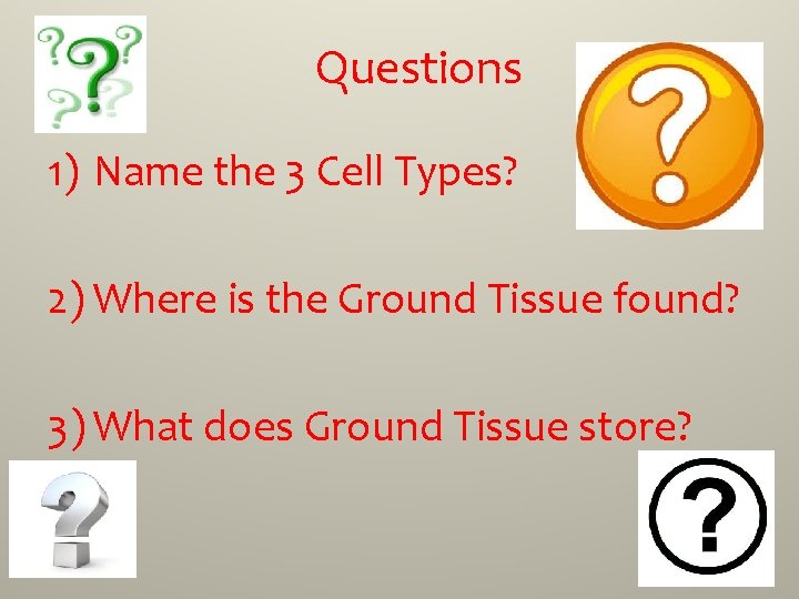 Questions 1) Name the 3 Cell Types? 2) Where is the Ground Tissue found?