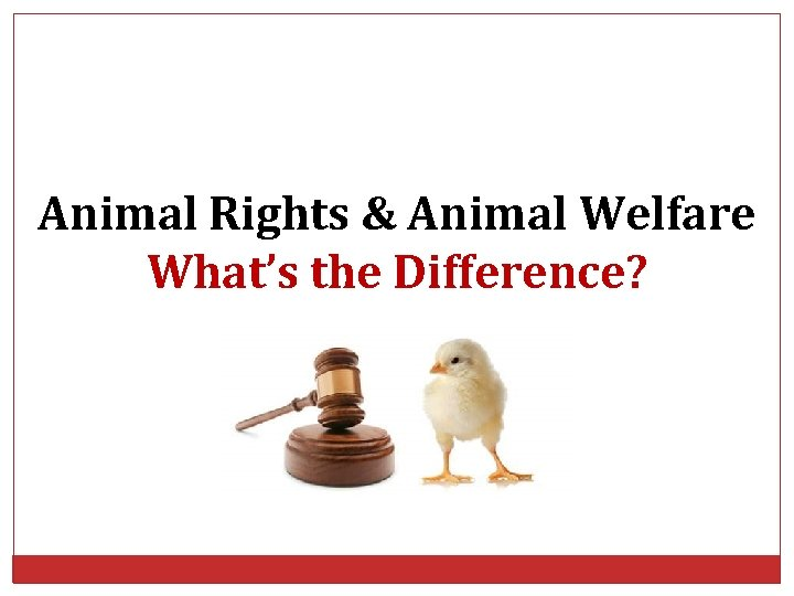 Animal Rights & Animal Welfare What's the Difference?