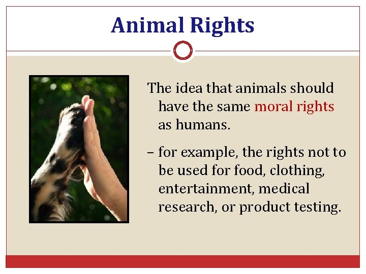 Animal Rights The idea that animals should have the same moral rights as humans.