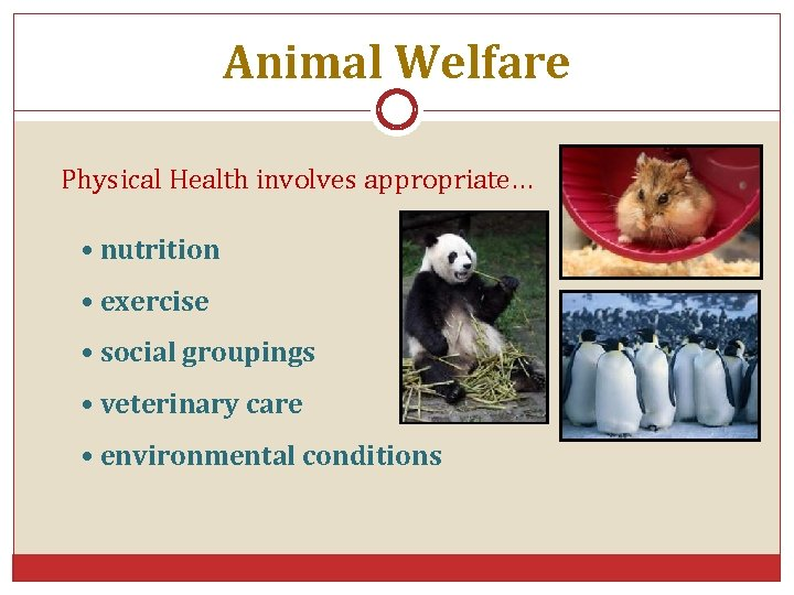 Animal Welfare Physical Health involves appropriate… • nutrition • exercise • social groupings •