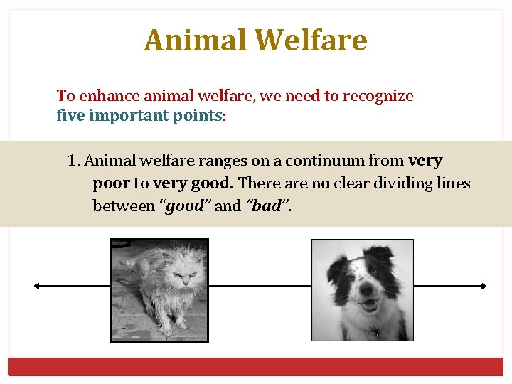 Animal Welfare To enhance animal welfare, we need to recognize five important points: 1.