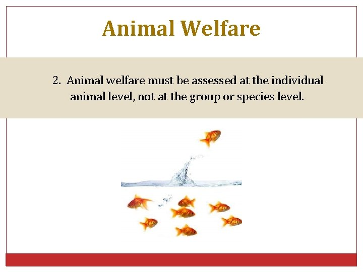 Animal Welfare 2. Animal welfare must be assessed at the individual animal level, not
