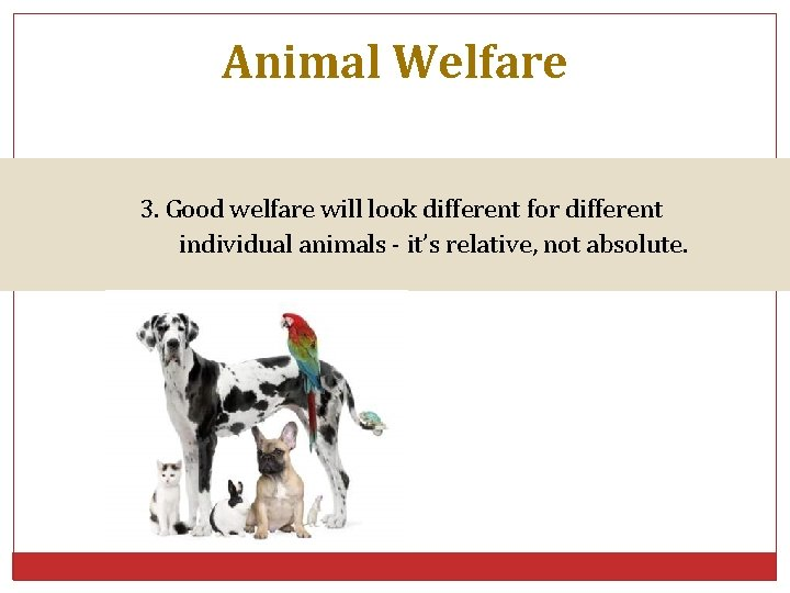 Animal Welfare 3. Good welfare will look different for different individual animals - it's