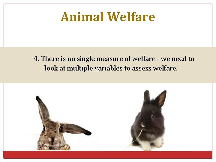 Animal Welfare 4. There is no single measure of welfare - we need to