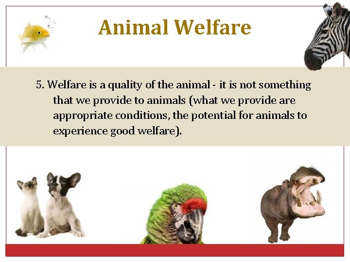 Animal Welfare 5. Welfare is a quality of the animal - it is not