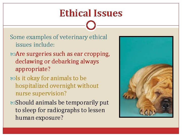 Ethical Issues Some examples of veterinary ethical issues include: Are surgeries such as ear
