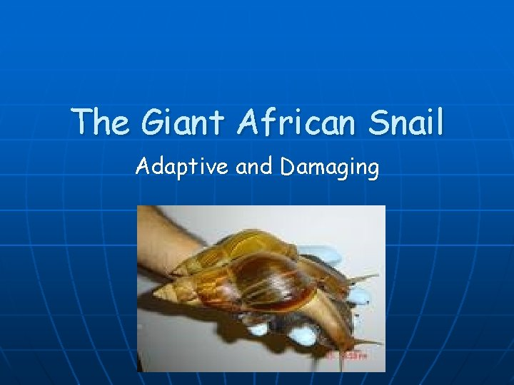 The Giant African Snail Adaptive and Damaging