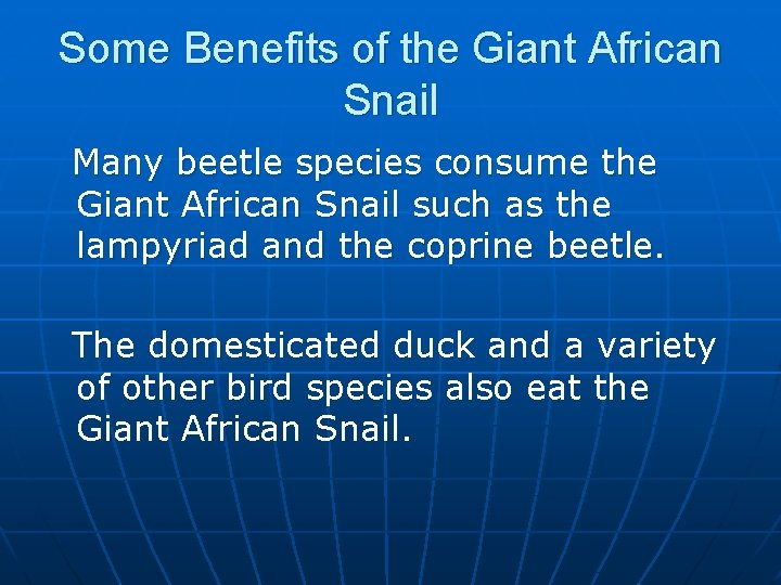Some Benefits of the Giant African Snail Many beetle species consume the Giant African