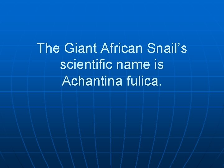 The Giant African Snail's scientific name is Achantina fulica.