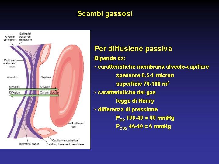 Scambi gassosi Per diffusione passiva Dipende da: • caratteristiche membrana alveolo-capillare spessore 0. 5