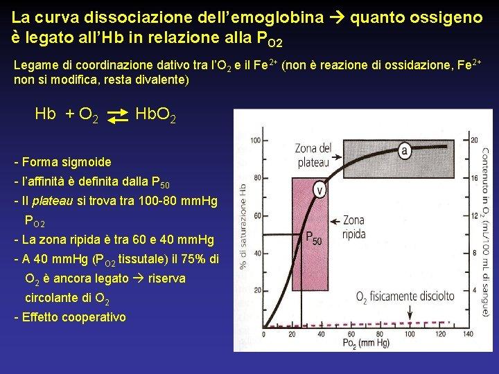 La curva dissociazione dell'emoglobina quanto ossigeno è legato all'Hb in relazione alla PO 2