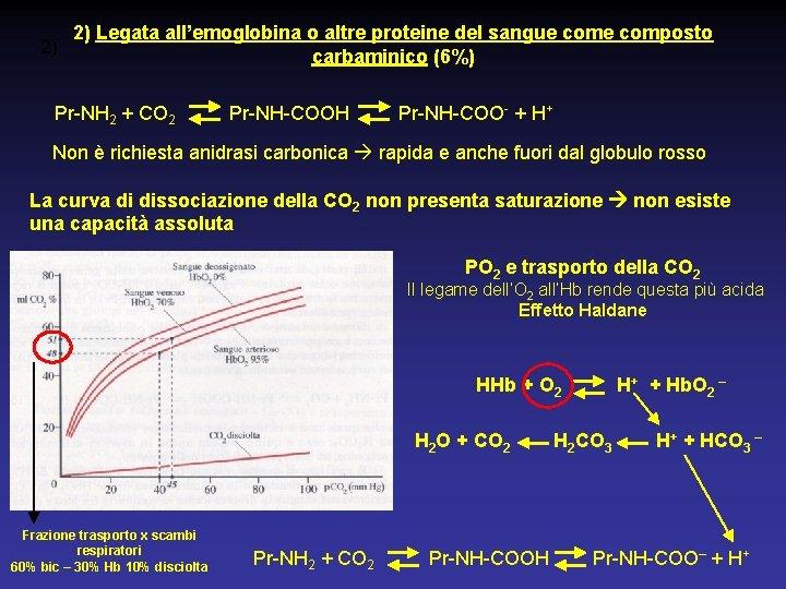 2) Legata all'emoglobina o altre proteine del sangue composto 2) carbaminico (6%) Pr-NH 2