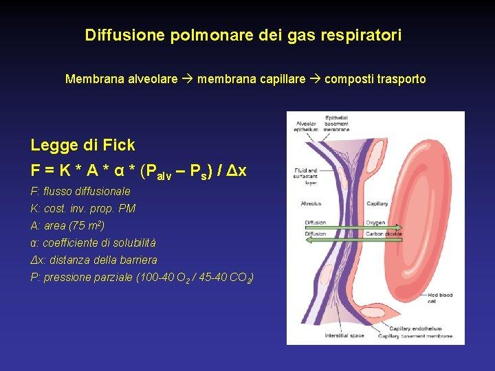 Diffusione polmonare dei gas respiratori Membrana alveolare membrana capillare composti trasporto Legge di Fick