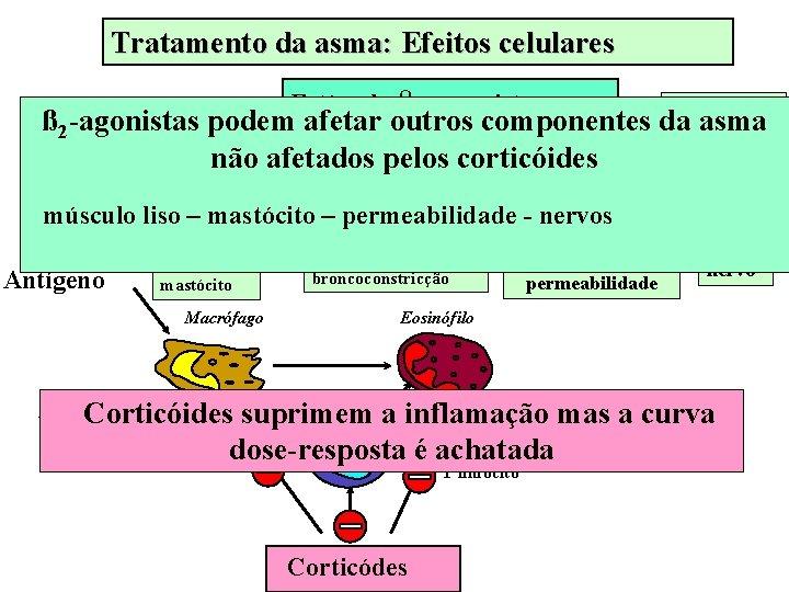 Tratamento da asma: Efeitos celulares Estímulo β 2 - agonista AGUDO ß 2 -agonistas