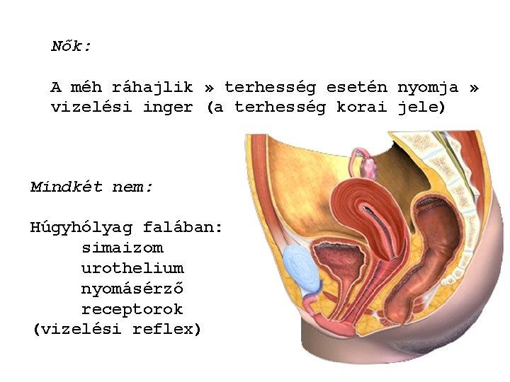 folyamatos pisilési inger Prostatis hogyan kell csökkenteni