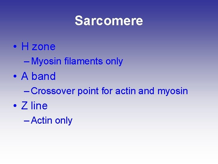 Sarcomere • H zone – Myosin filaments only • A band – Crossover point