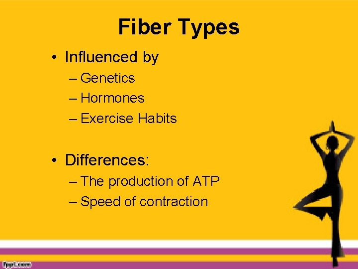 Fiber Types • Influenced by – Genetics – Hormones – Exercise Habits • Differences:
