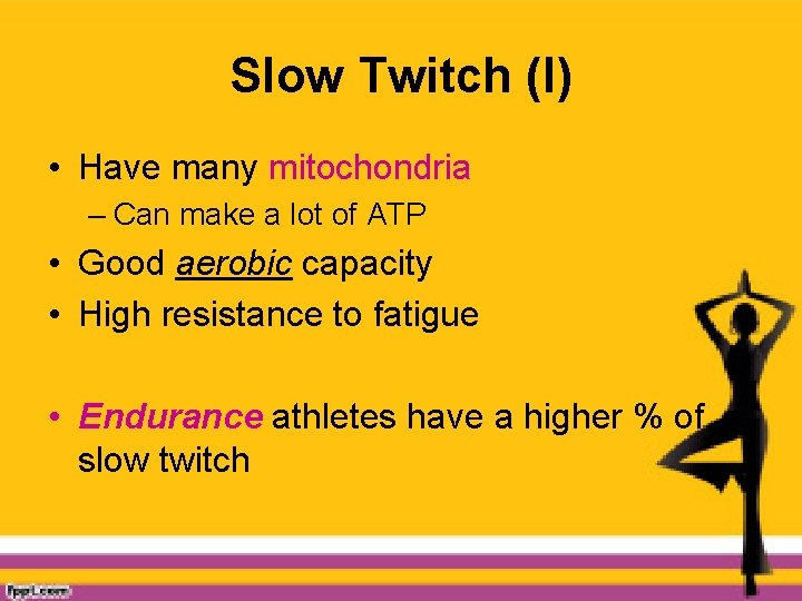 Slow Twitch (I) • Have many mitochondria – Can make a lot of ATP
