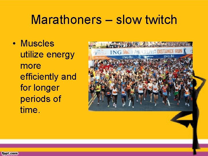 Marathoners – slow twitch • Muscles utilize energy more efficiently and for longer periods