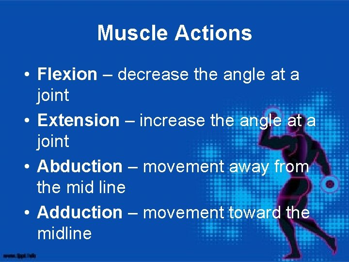 Muscle Actions • Flexion – decrease the angle at a joint • Extension –