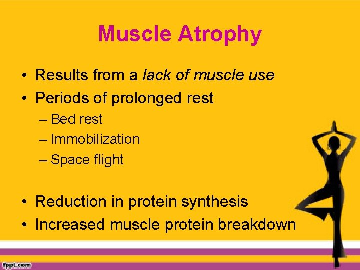 Muscle Atrophy • Results from a lack of muscle use • Periods of prolonged