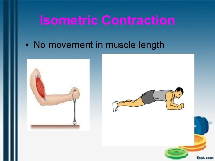 Isometric Contraction • No movement in muscle length