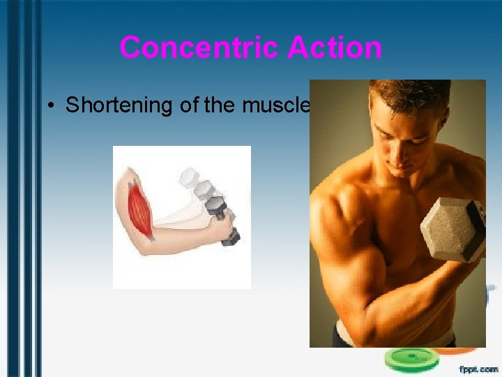 Concentric Action • Shortening of the muscle