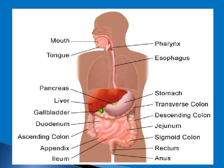 cancer pain abdominal wall