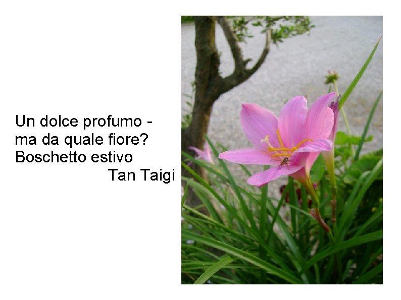 Un dolce profumo ma da quale fiore? Boschetto estivo Tan Taigi