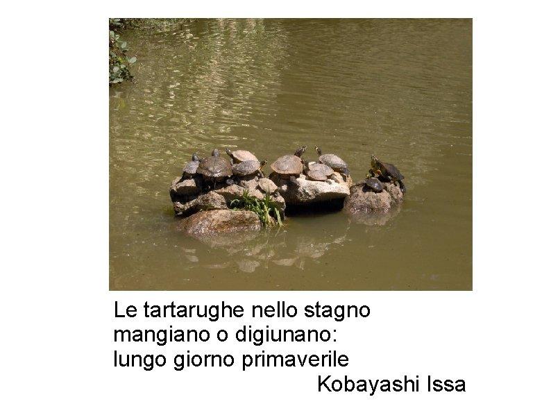 Le tartarughe nello stagno mangiano o digiunano: lungo giorno primaverile Kobayashi Issa