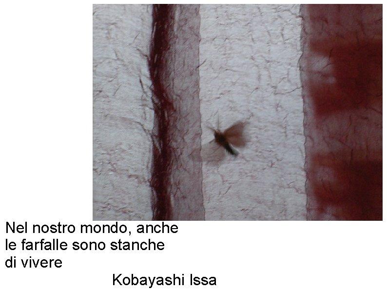 Nel nostro mondo, anche le farfalle sono stanche di vivere Kobayashi Issa
