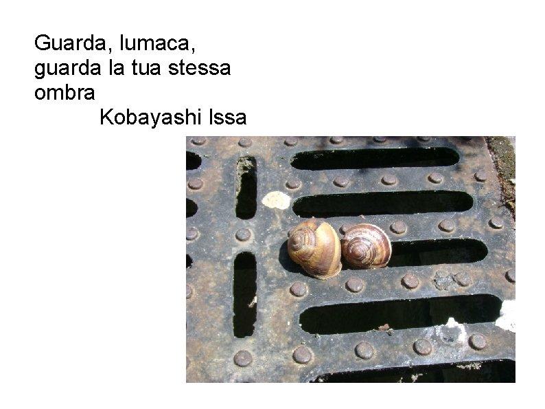 Guarda, lumaca, guarda la tua stessa ombra Kobayashi Issa