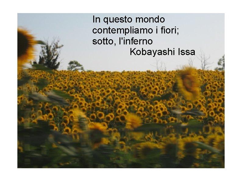 In questo mondo contempliamo i fiori; sotto, l'inferno Kobayashi Issa