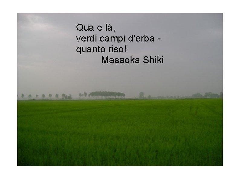 Qua e là, verdi campi d'erba quanto riso! Masaoka Shiki