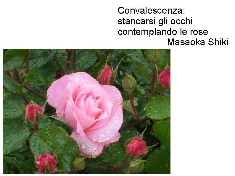 Convalescenza: stancarsi gli occhi contemplando le rose Masaoka Shiki