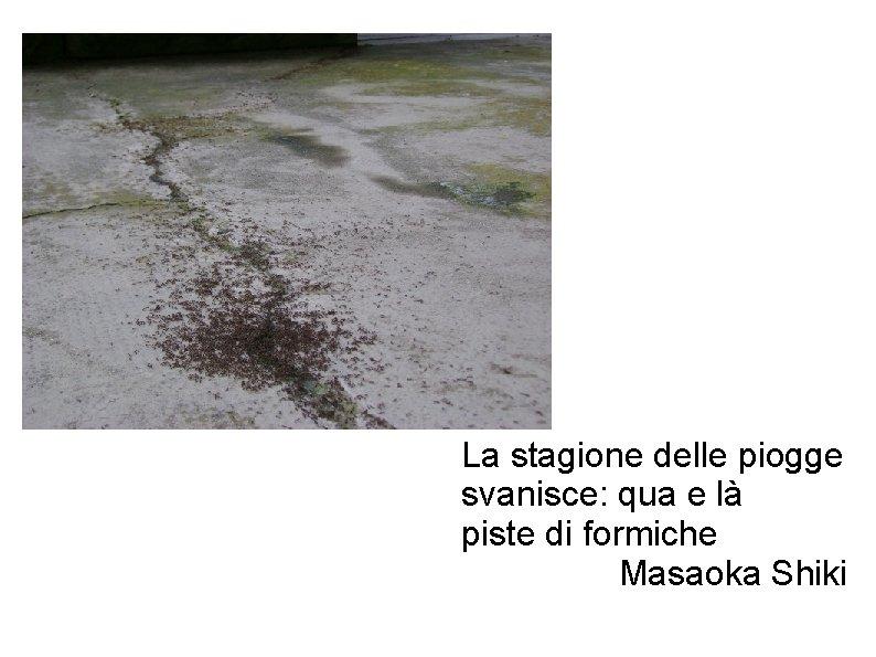 La stagione delle piogge svanisce: qua e là piste di formiche Masaoka Shiki