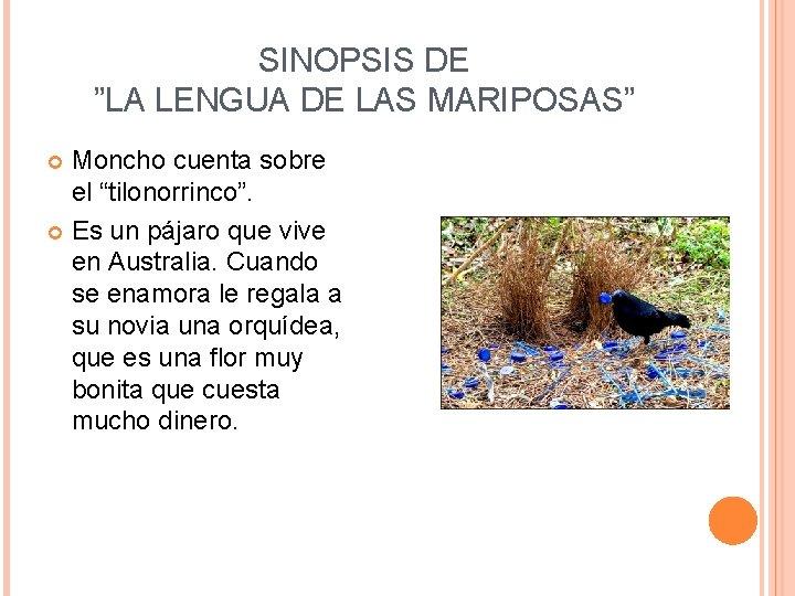 """SINOPSIS DE """"LA LENGUA DE LAS MARIPOSAS"""" Moncho cuenta sobre el """"tilonorrinco"""". Es un"""