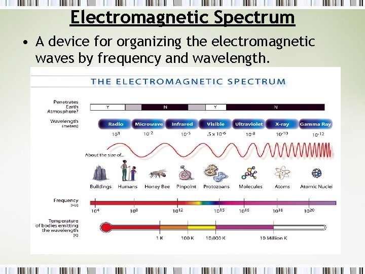 Electromagnetic Spectrum • A device for organizing the electromagnetic waves by frequency and wavelength.