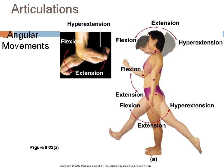 Articulations Angular Movements Figure 6 -32(a)