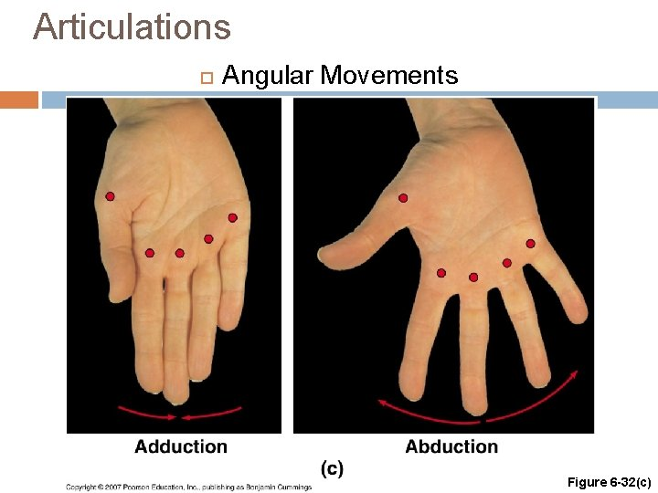 Articulations Angular Movements Figure 6 -32(c)
