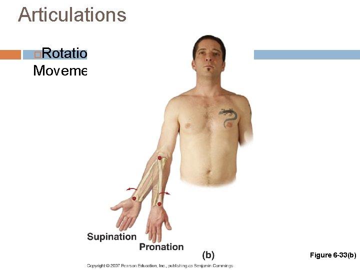 Articulations Rotational Movements Figure 6 -33(b)