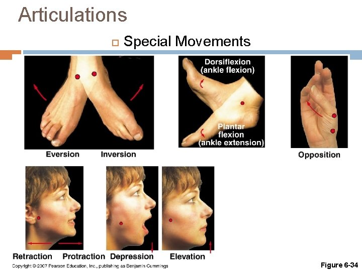 Articulations Special Movements Figure 6 -34