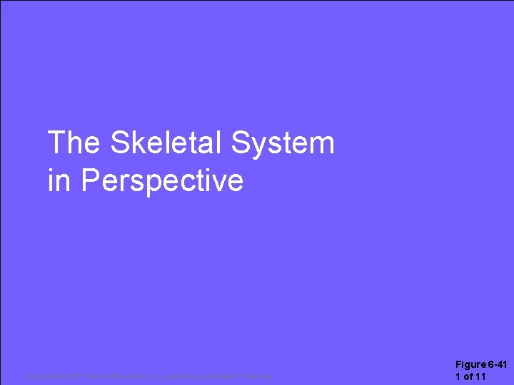 The Skeletal System in Perspective Copyright © 2007 Pearson Education, Inc. , publishing as