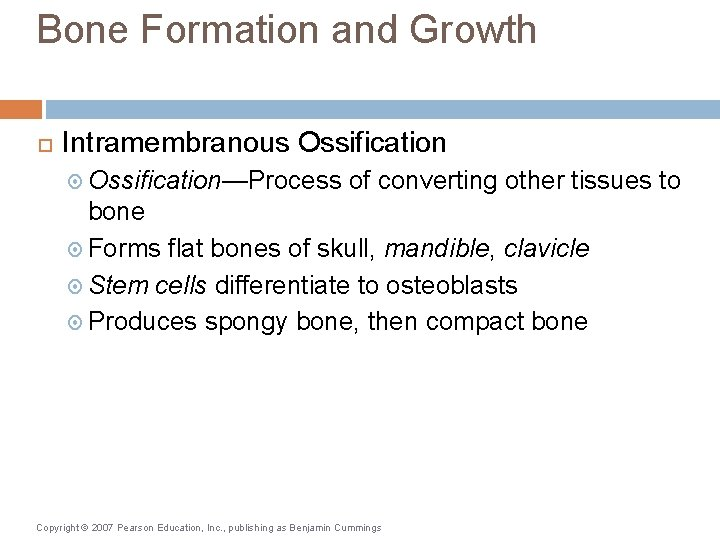 Bone Formation and Growth Intramembranous Ossification—Process of converting other tissues to bone Forms flat